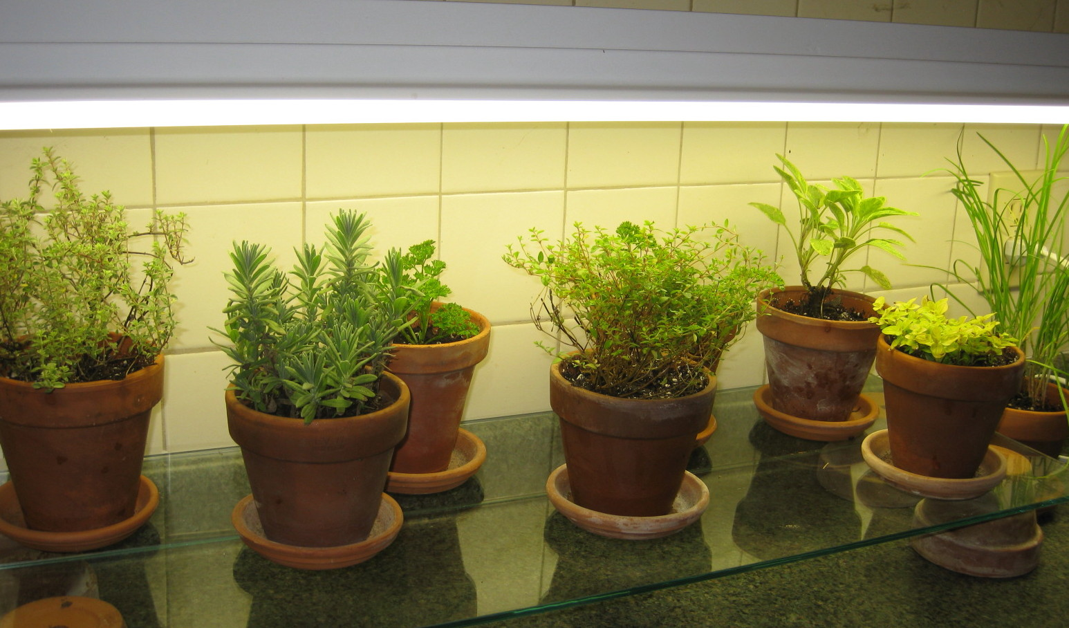 Unique Indoor Herb Garden Light Sensational Design Kit With