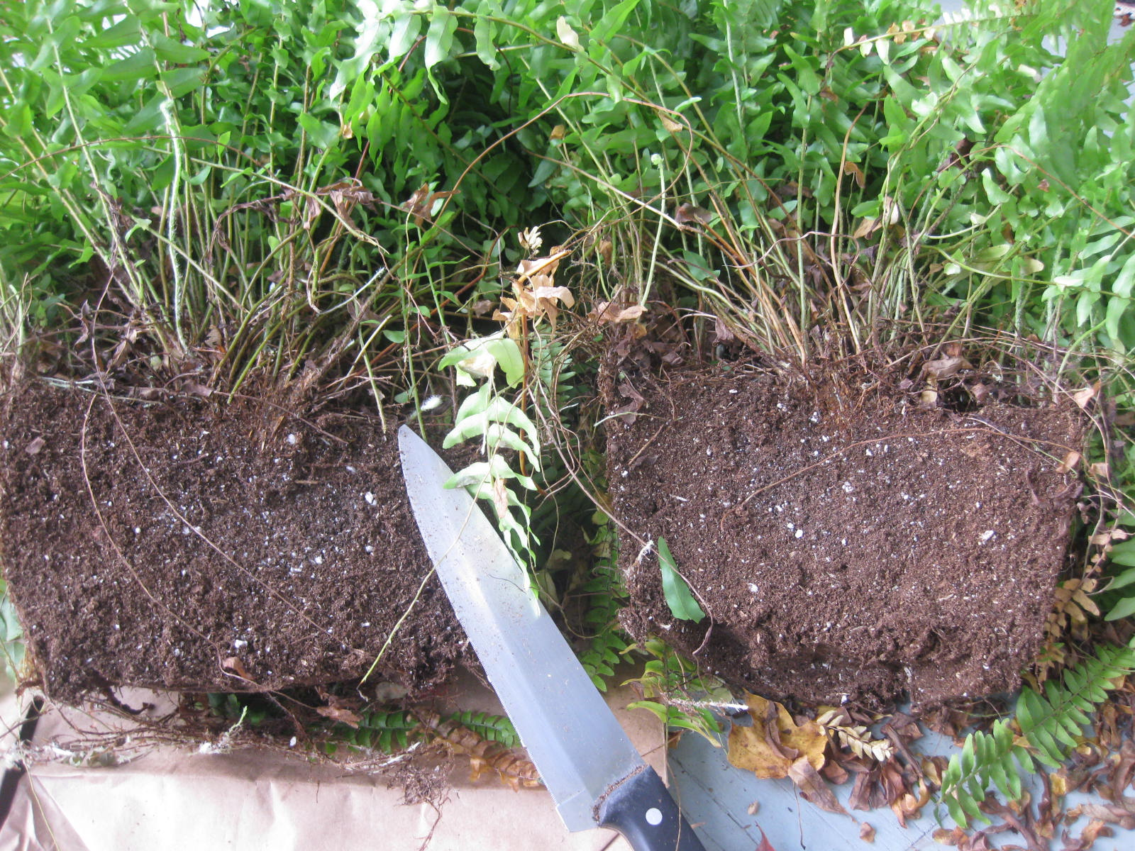 container gardening 2014 notes