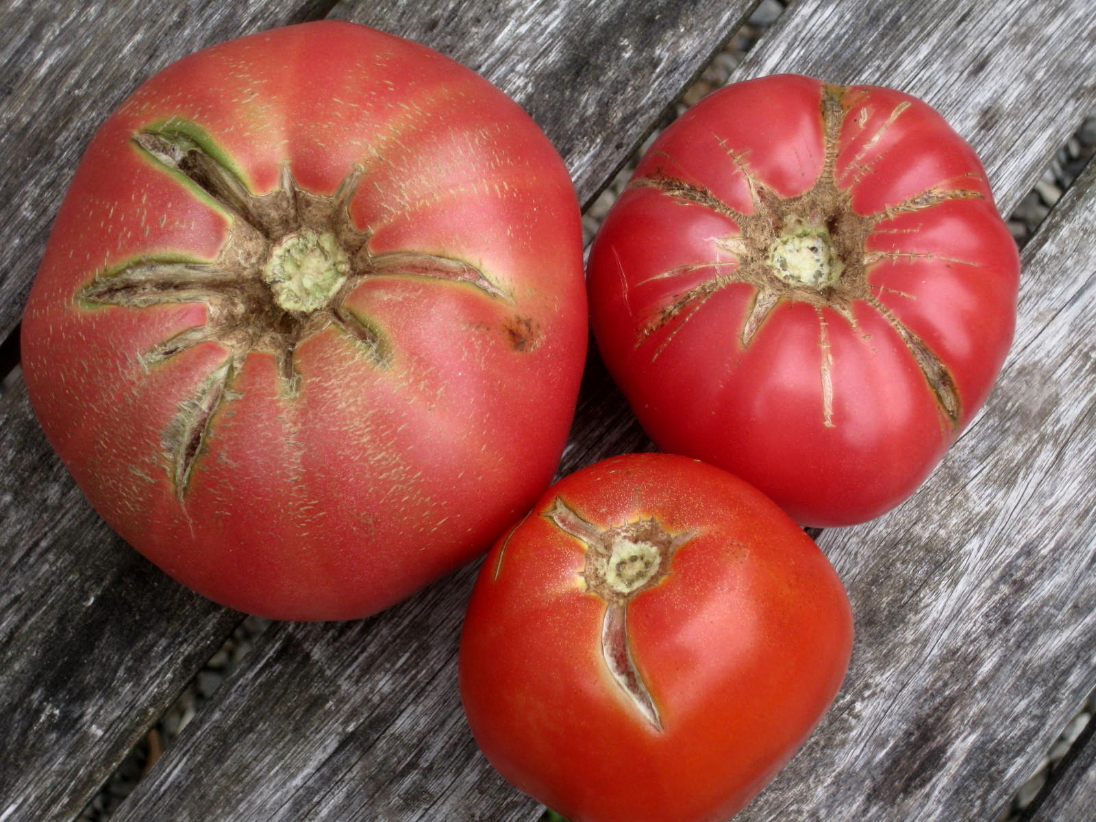 Tomato Trouble: Cracks in Skin