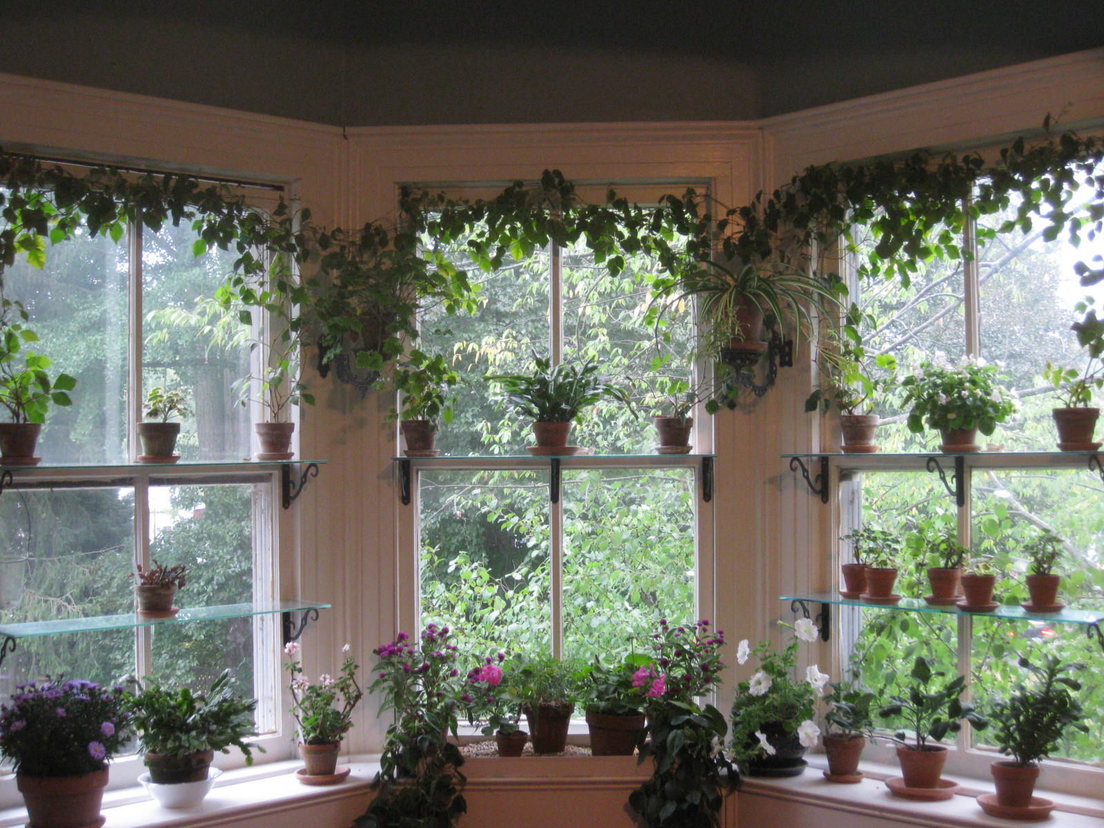 Bringing houseplants indoors for Garden window