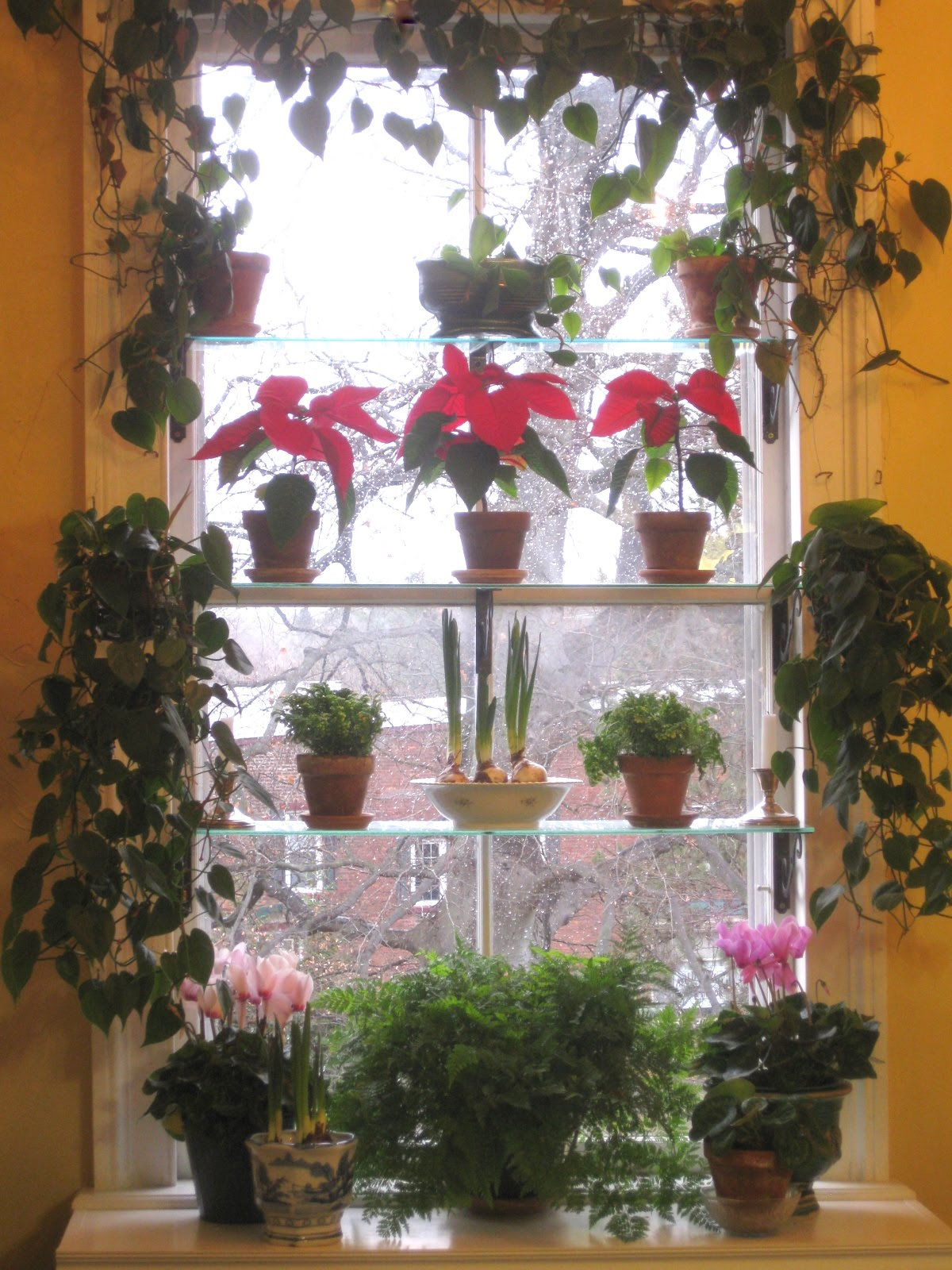 The Window Garden in December