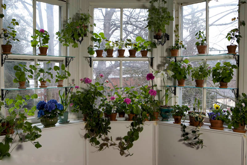 Seven Ways To Beautiful Houseplants