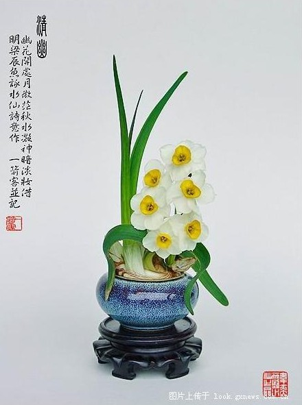 Chinese Sacred Lily A Giveaway