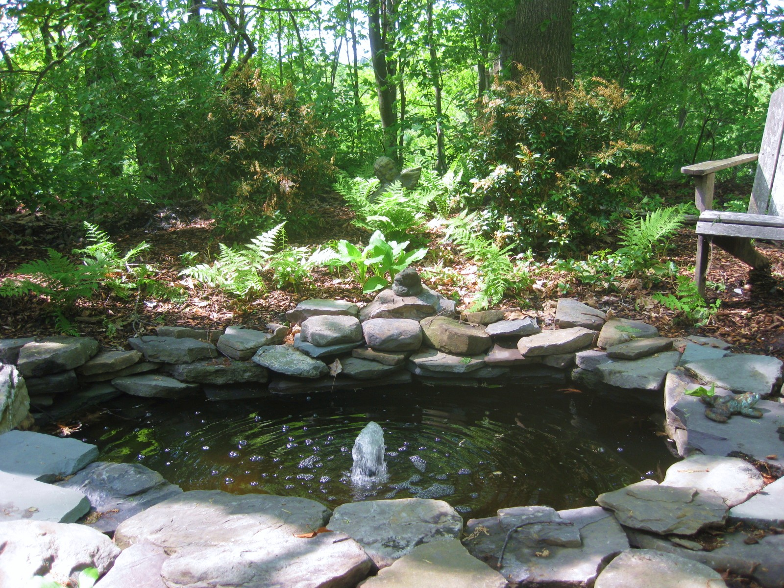From wild patch to woodland garden for The backyard pond