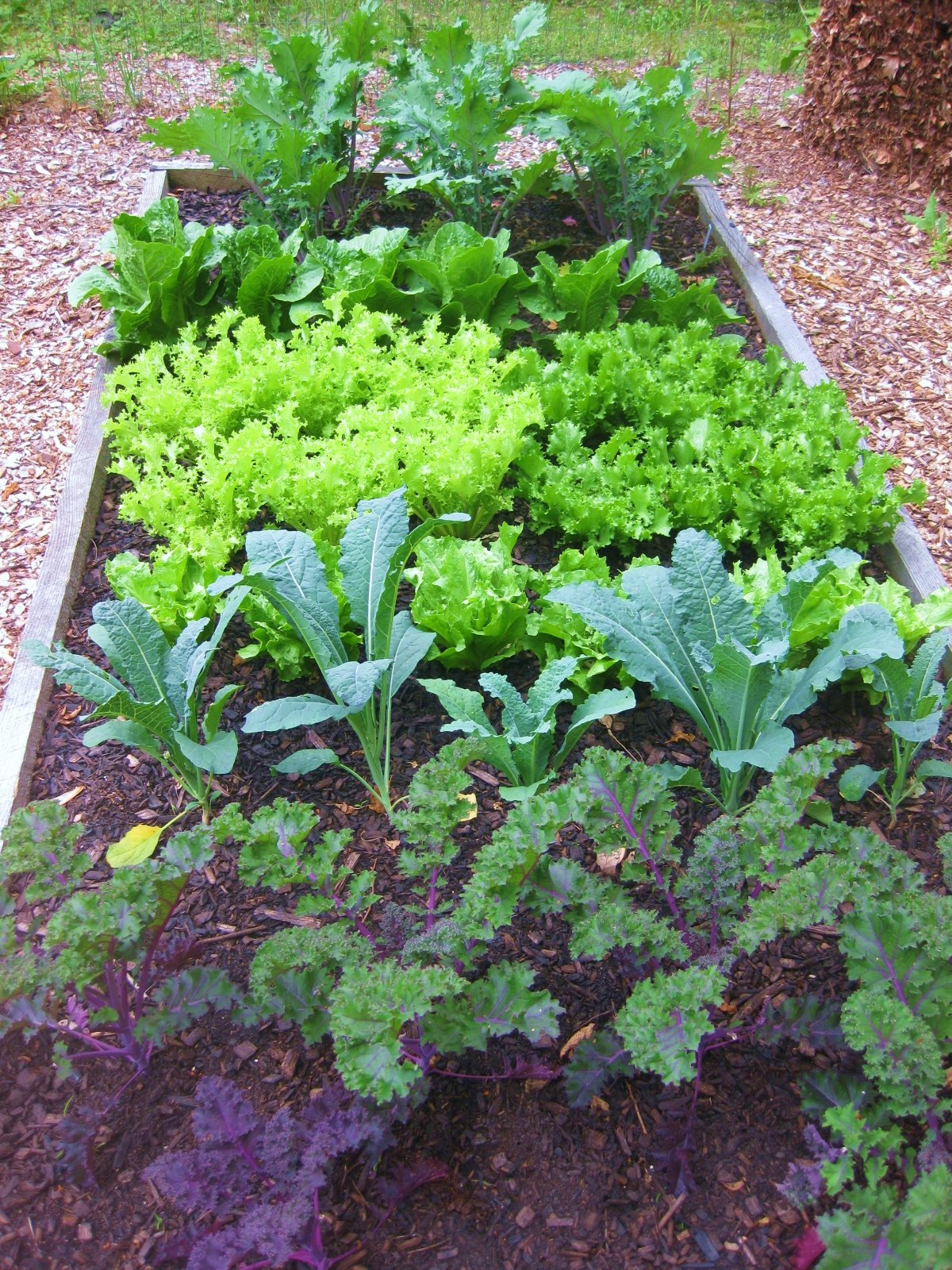 Organic Kitchen Garden The Easy Kitchen Garden