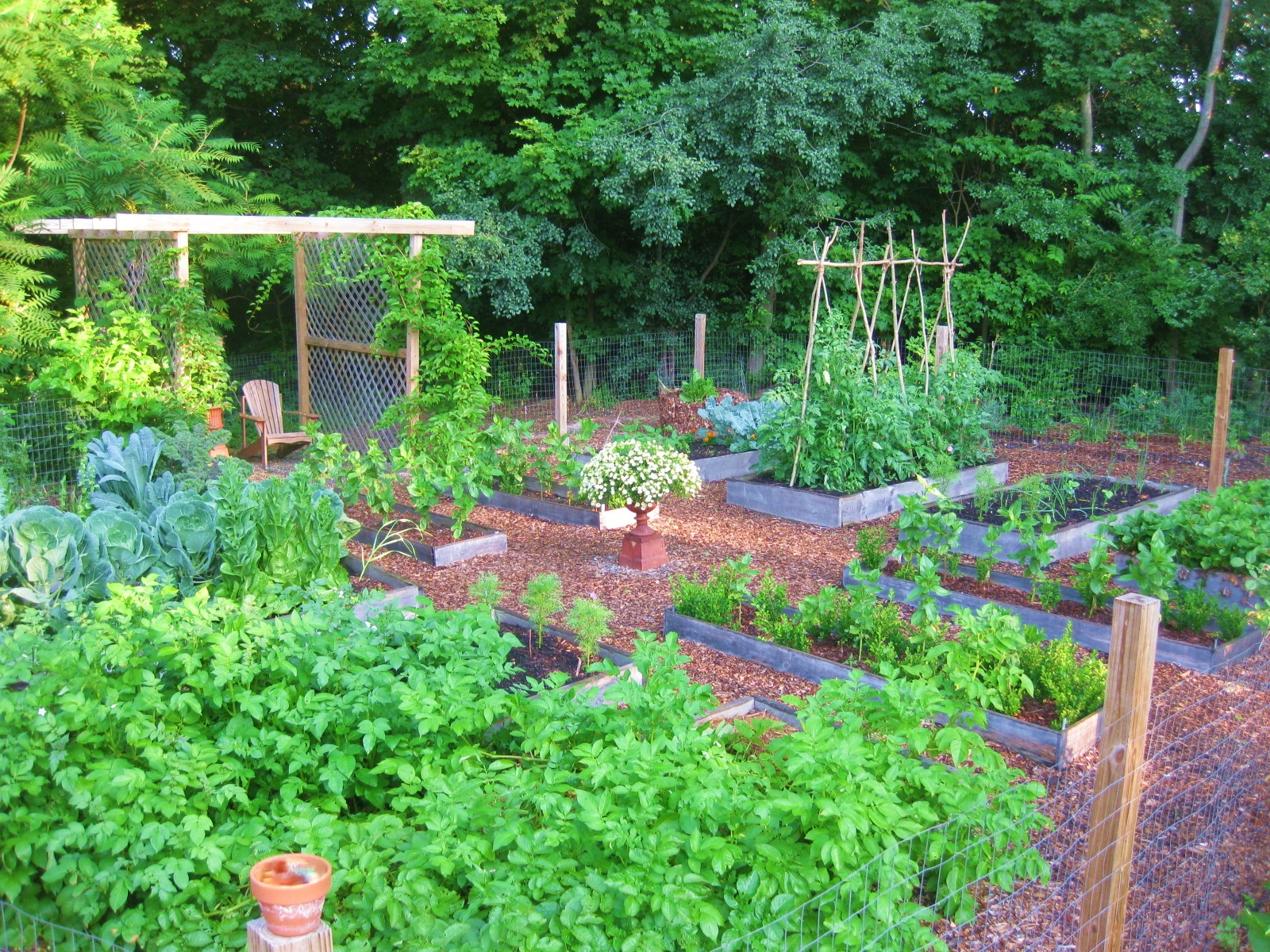 The easy kitchen garden for Simple garden design
