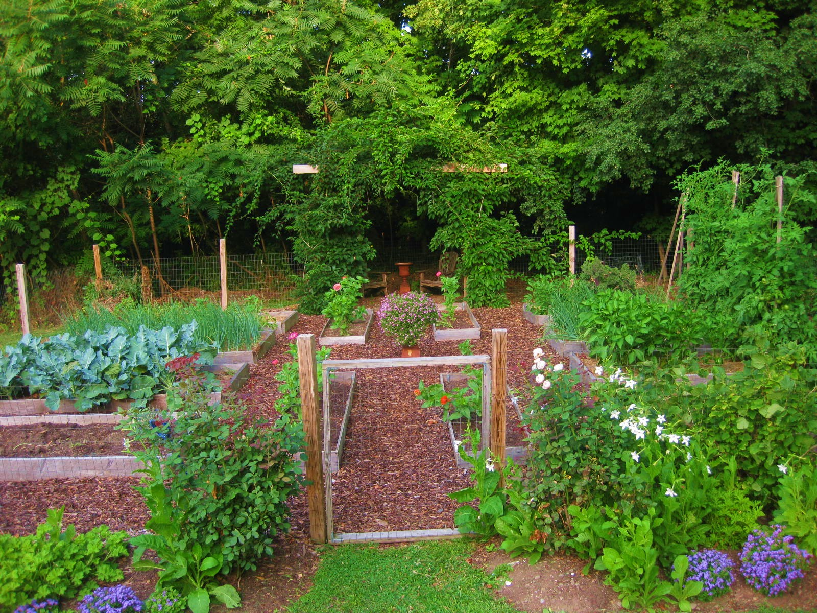 Your july veggie garden updates for Landscape gardeners