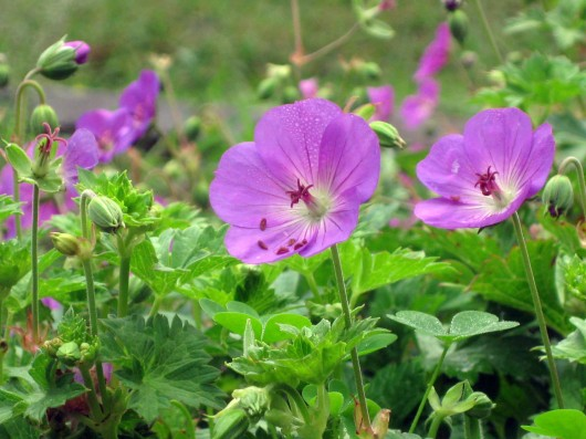 Perennials Which Require Cold Stratification