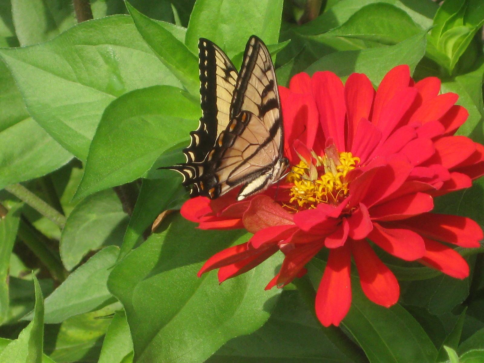 The July Garden Chores