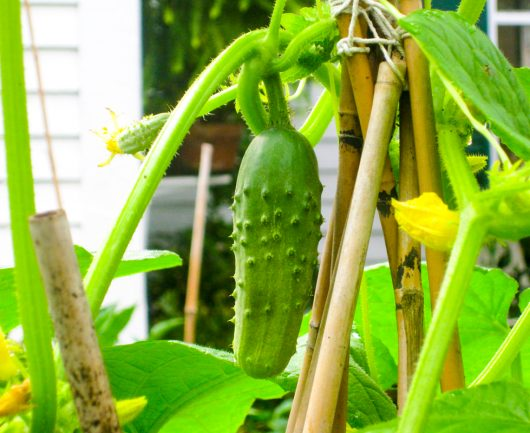 Vegetables to plant in July for autumn harvest