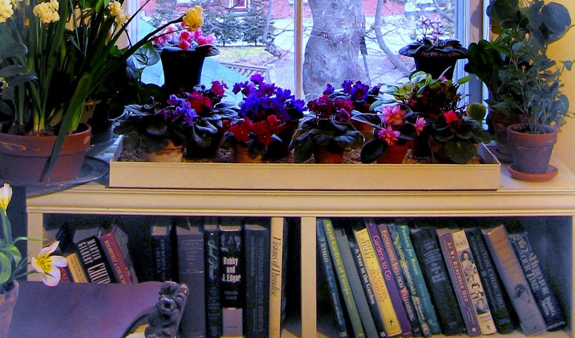 Creating A Window Garden with Plant Shelves & Brackets