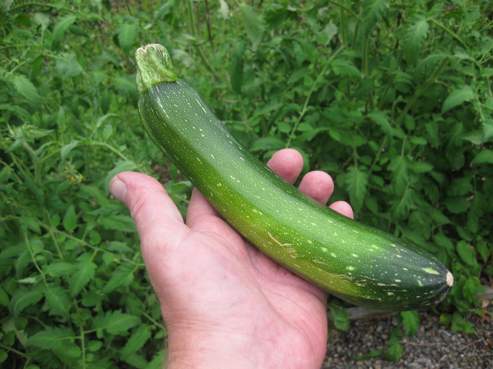 Zucchini-mania