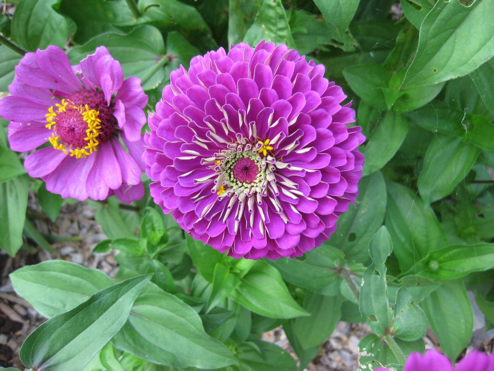 Winter sow veggies flowering annuals now izmirmasajfo