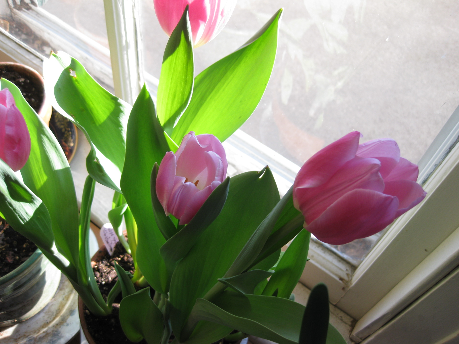 Photo Gallery: Blooming Bulbs for February
