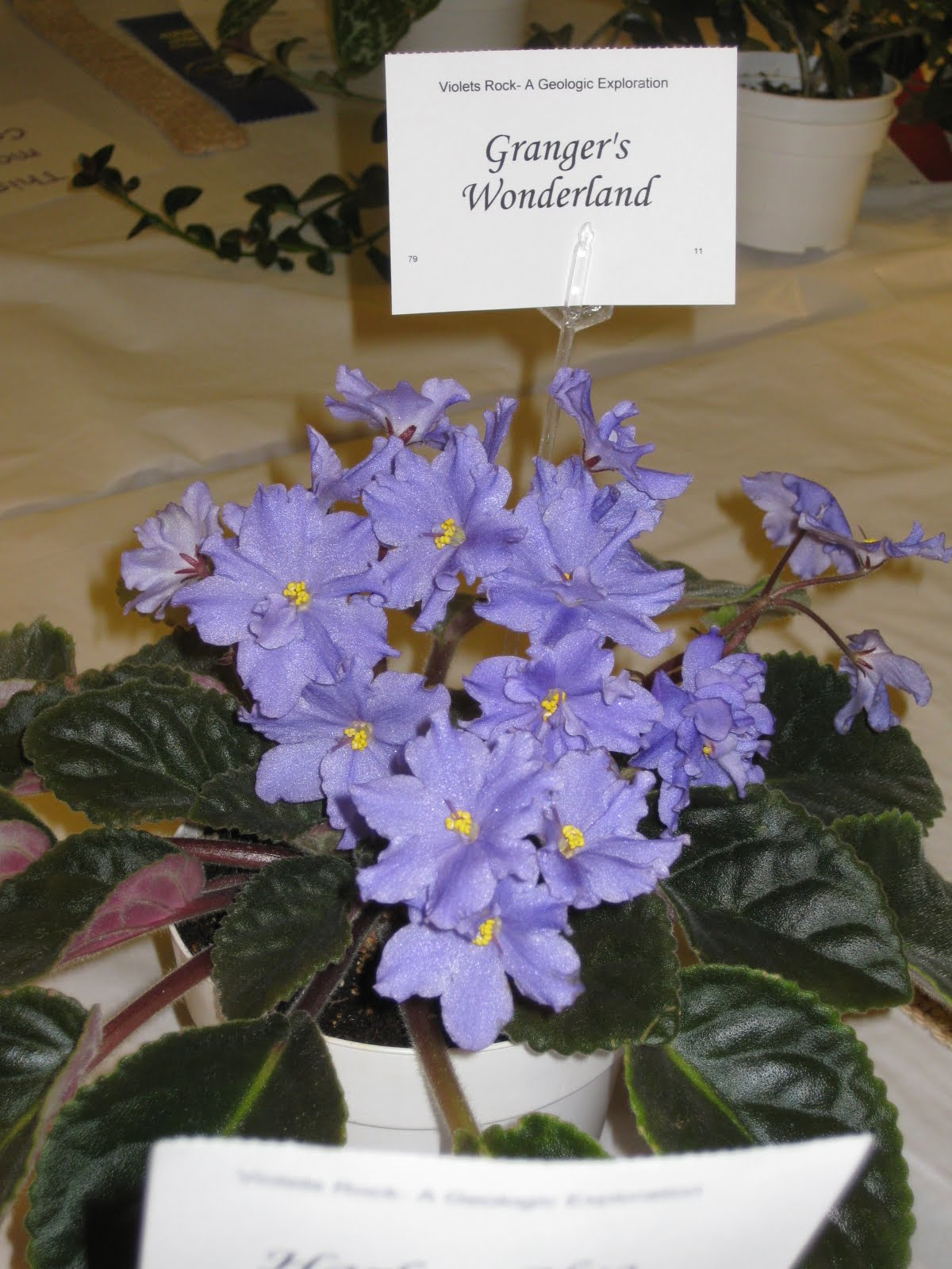 Highlights from 2010 African Violet Show