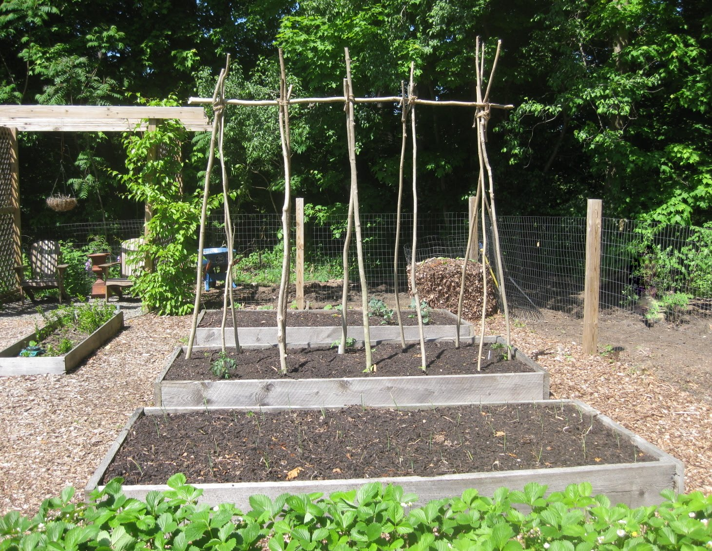 Photo Gallery: My Super-Duper Tomato Trellis