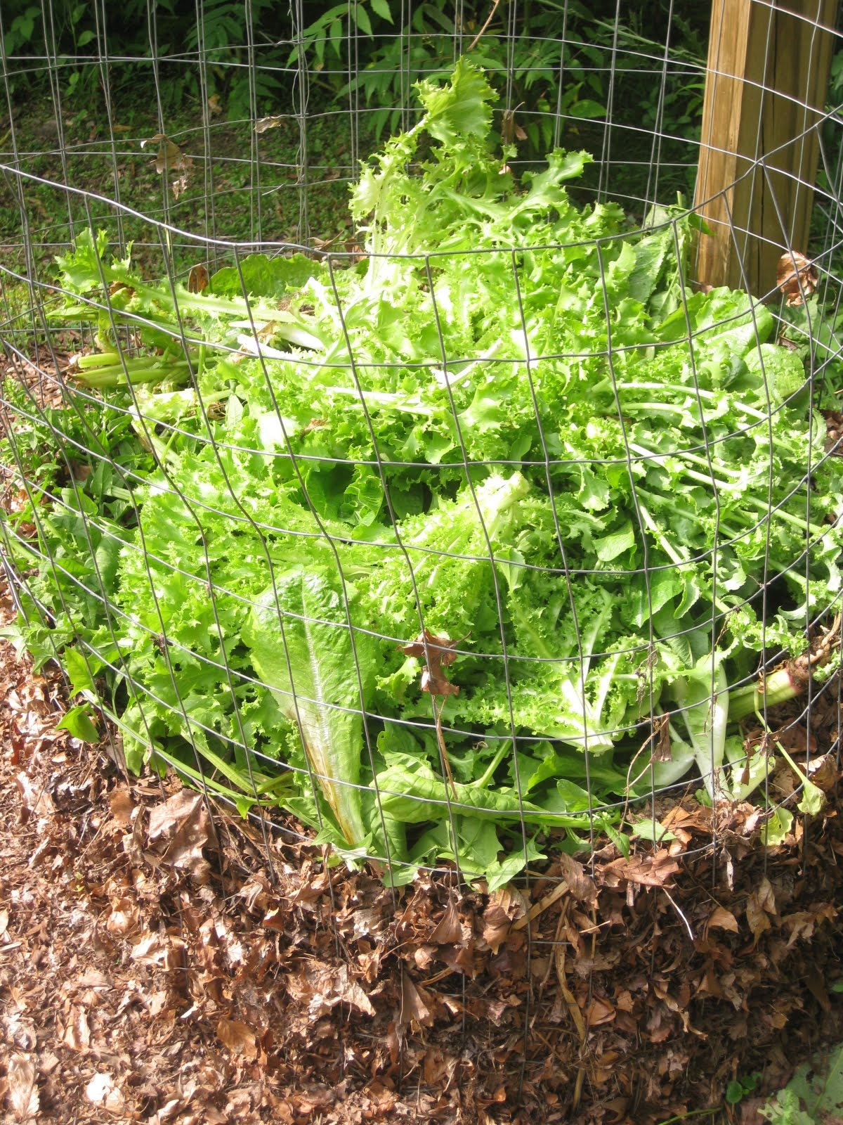 My Wire-Mesh Composting-System