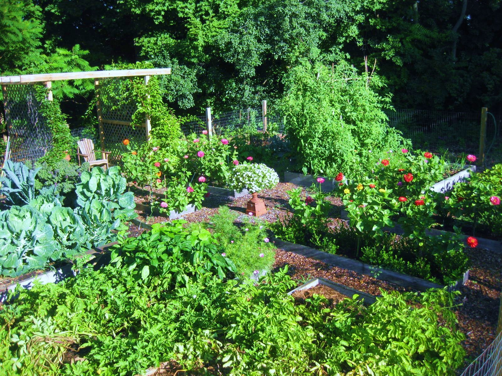 Your Veggie Garden, in Hindsight