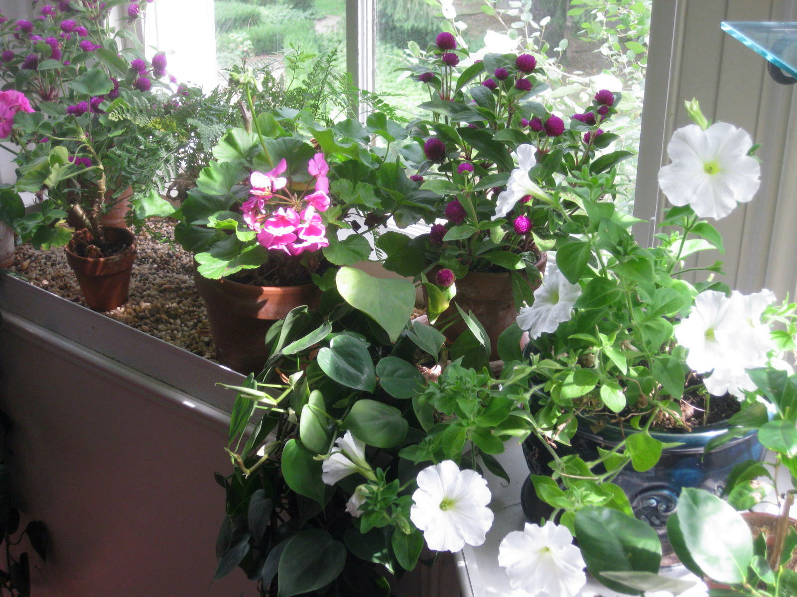 Bringing Houseplants Indoors
