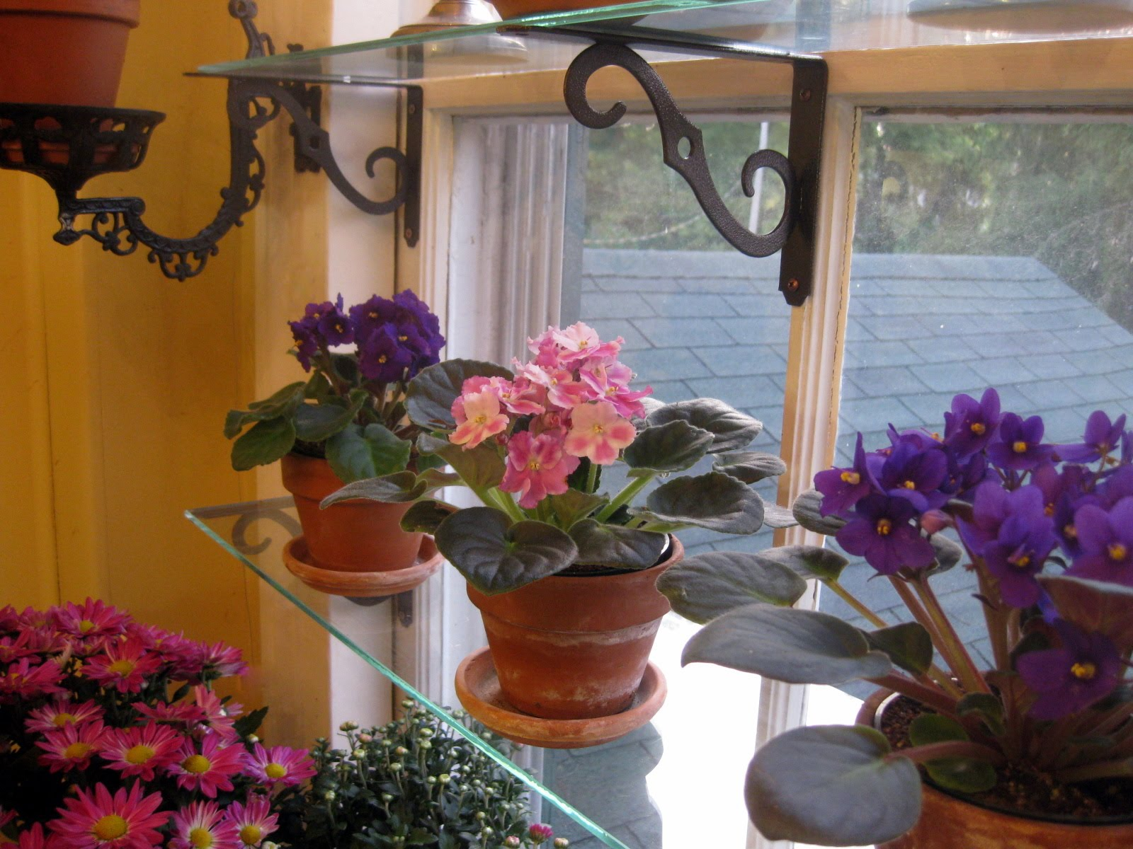 The Window Garden in Autumn