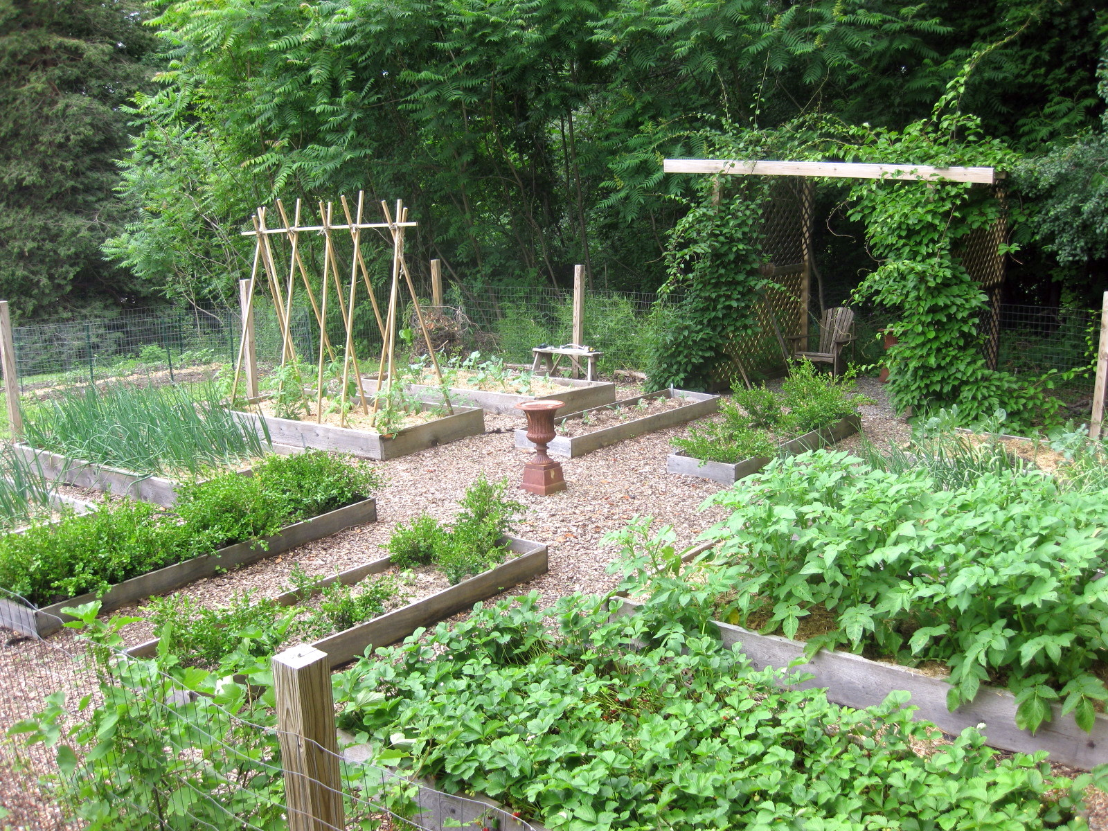 How's Your Kitchen Garden Doing?