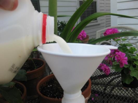 Got Blackspot? Get Milk  – Kevin Lee Jacobs