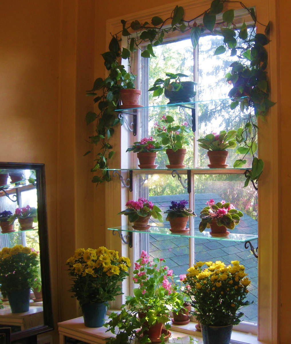 Kitchen Plant Shelf Decorating Ideas: Steps To A Window Garden