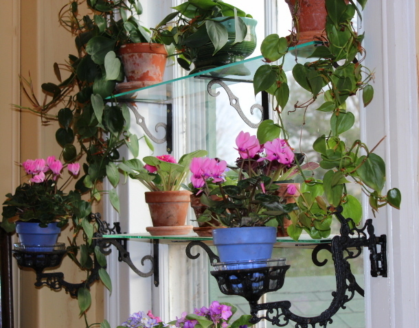 Window Garden, November 2012