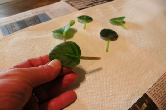 how to propagate African violets