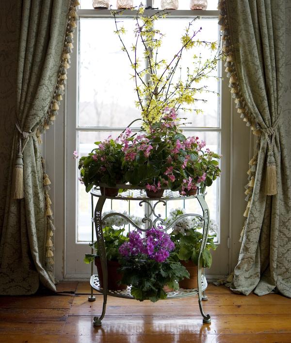 Instant Spring: Forcing Forsythia