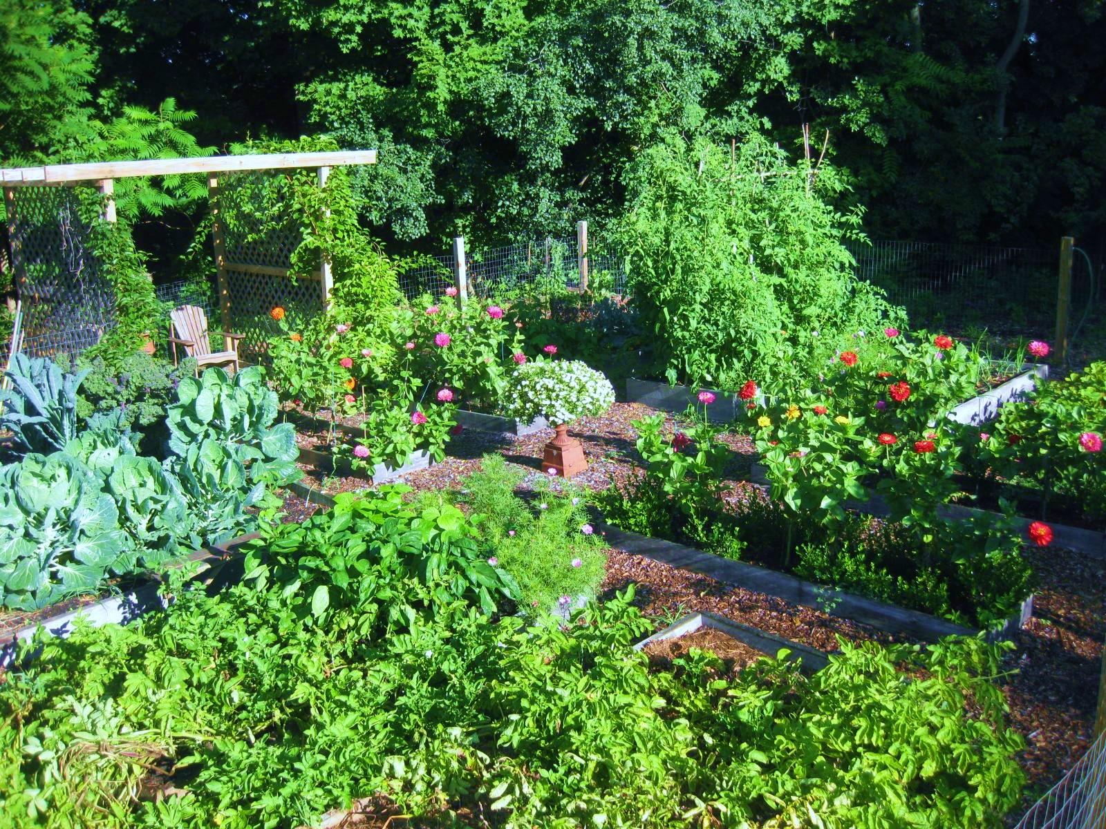 Kitchen Garden In July