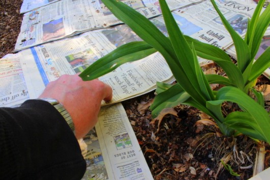 How I Smother Weeds with Newspaper - Kevin Lee Jacobs