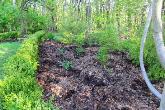 And I M Hy Too For Won T Have To Deal With Weeds In This Bed At Least One Season Another Mulched