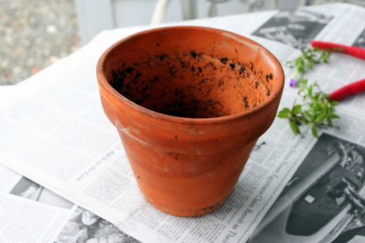 Propagate Petunias for Winter Bloom -- use a 6-inch pot