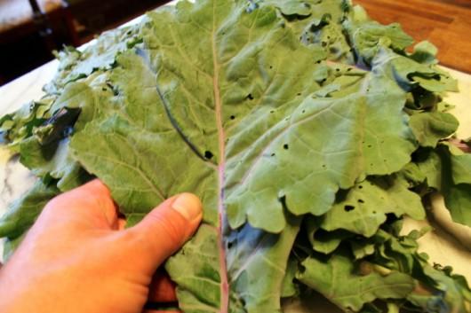 how to fix bitter kale pesto