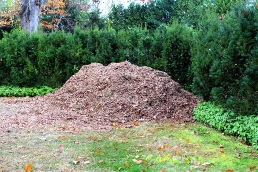 """Image result for shredded leaf mulch"""""""