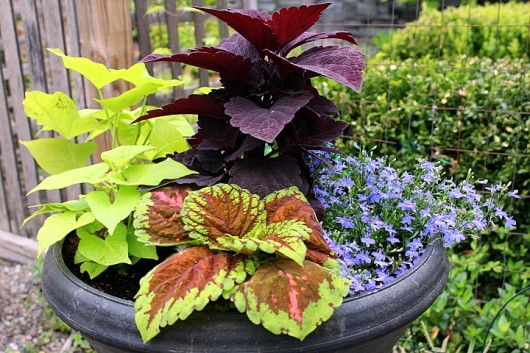 Shady Porch Container Plants