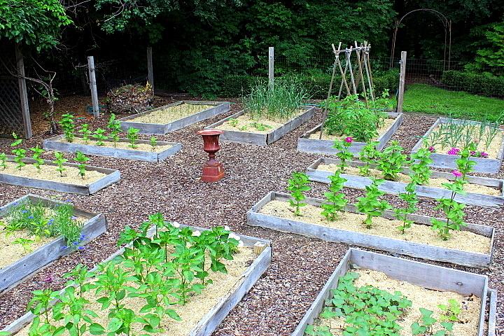 How's Your Veggie Garden Progressing?