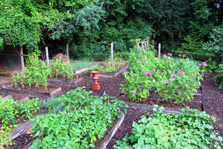 A Short Walk in the Kitchen Garden