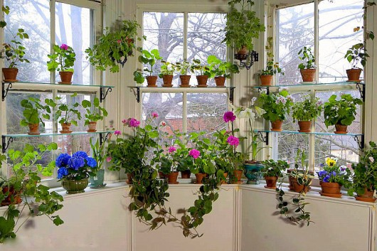 window garden of Kevin Lee Jacobs