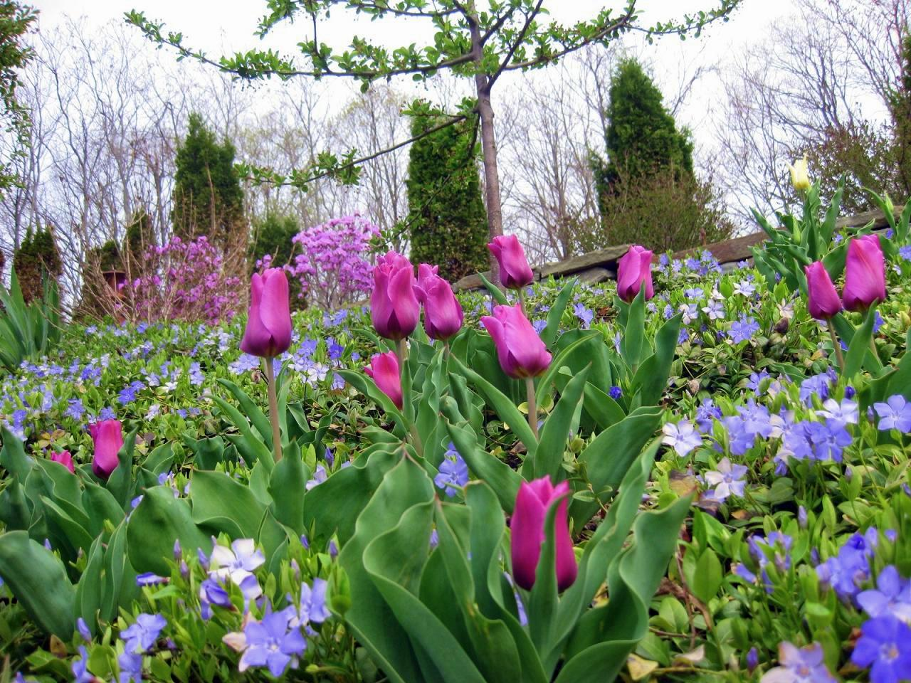 Bulbs I'm Planting for Spring Color and Perfume