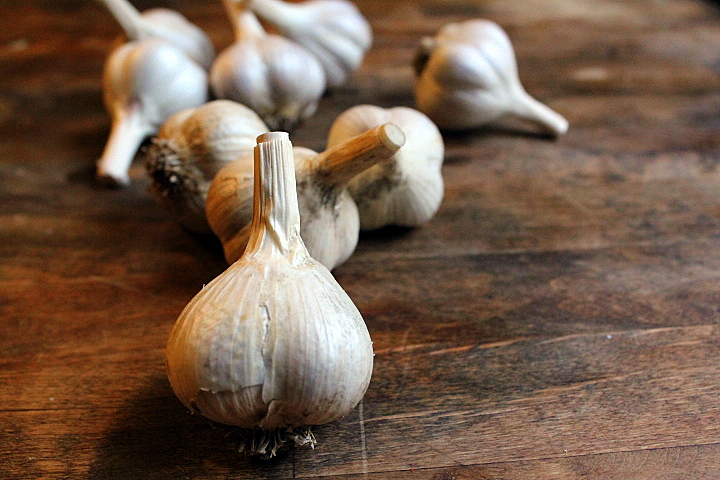 How I Plant, Grow, Harvest, and Store Garlic