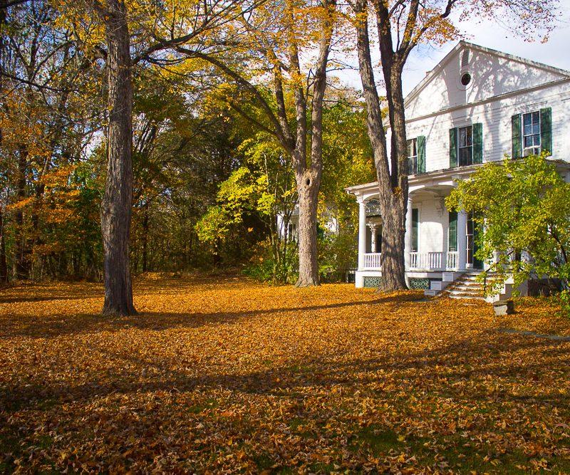 November House & Garden Chores