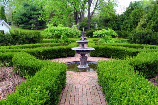 boxwood garden 5-12-16 picassa