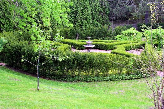 boxwood garden from south hill