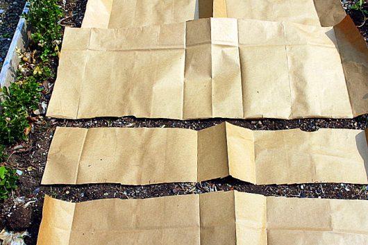 planting rhough paper 2 picassa