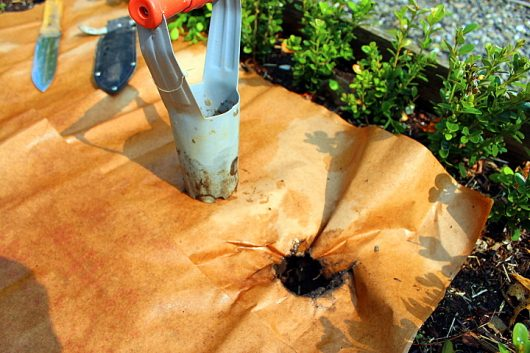 planting rhough paper 5