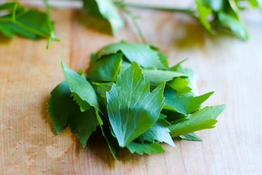 lettuce soup lovage 6-21-16 jpg