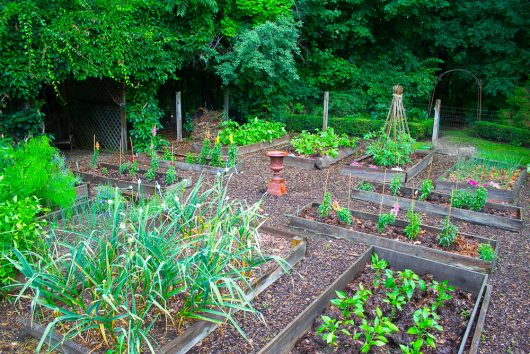 kitchen garden north view 7-08-16 jpg
