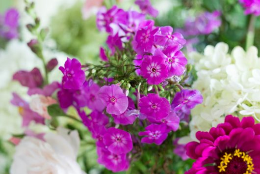 flower arrangement entrance phlox 9-05-16